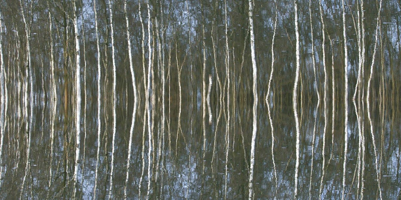 birkenwald_2014